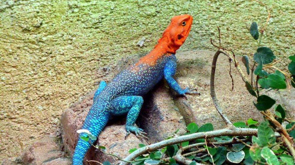 lizard-174074_1920