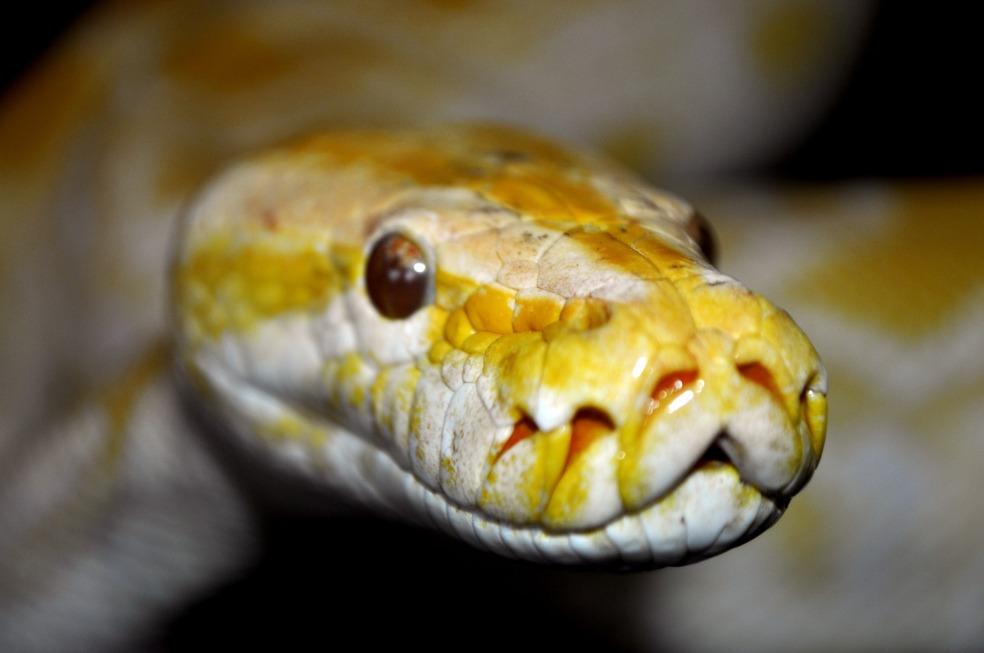 snake-963535_1920