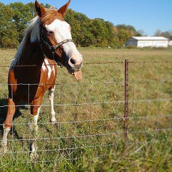 horse-1782715__340